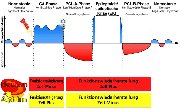 zweiphasigkeit 2phasigkeit konfliktaktiv heilung reparatur lösung pcl pcla pclb epi epikrise ca ontogenetisches system drittes naturgesetz biologisch
